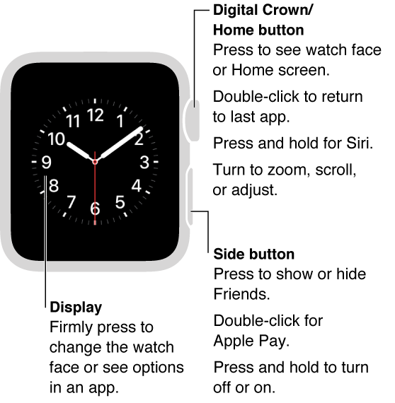 Front of Apple Watch with a callout to the Digital Crown/Home Button: Press to see watch face or Home screen. Double-click to return to last app. Press and hold for Siri. Turn to zoom, scroll, or adjust. Second callout is to the side button: Press to show or hide Friends. Double-click for Apple Pay. Press and hold to turn off or on. Third callout points to the display: Press to change watch face. In an app, press to see options.
