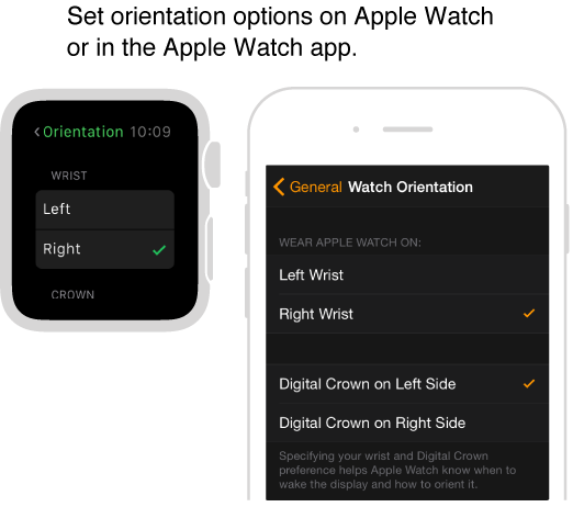 Side by side screens showing the Orientation settings on Apple Watch and the same settings in the Apple Watch app on iPhone. You can set your wrist and digital crown preference.