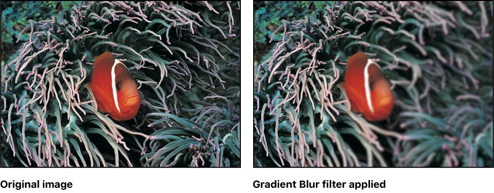 Motion: Gradient Blur