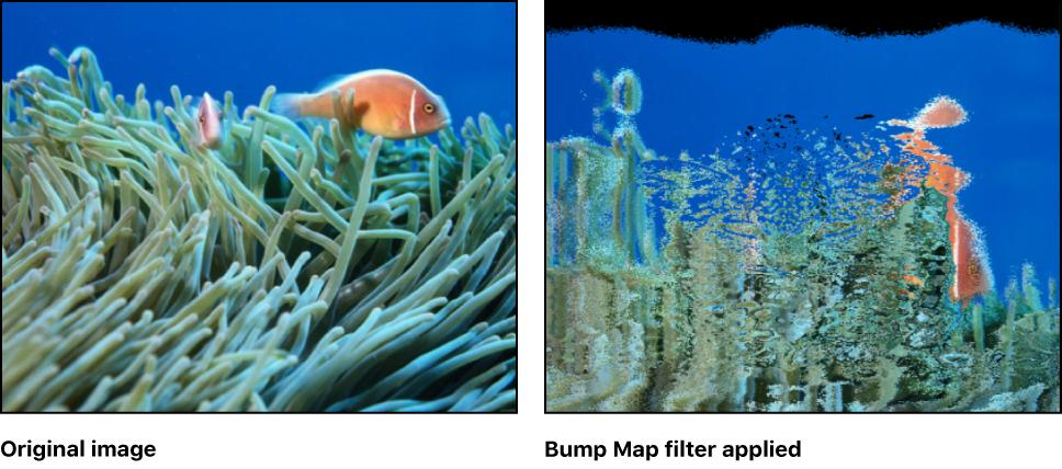 Motion: バンプマップ
