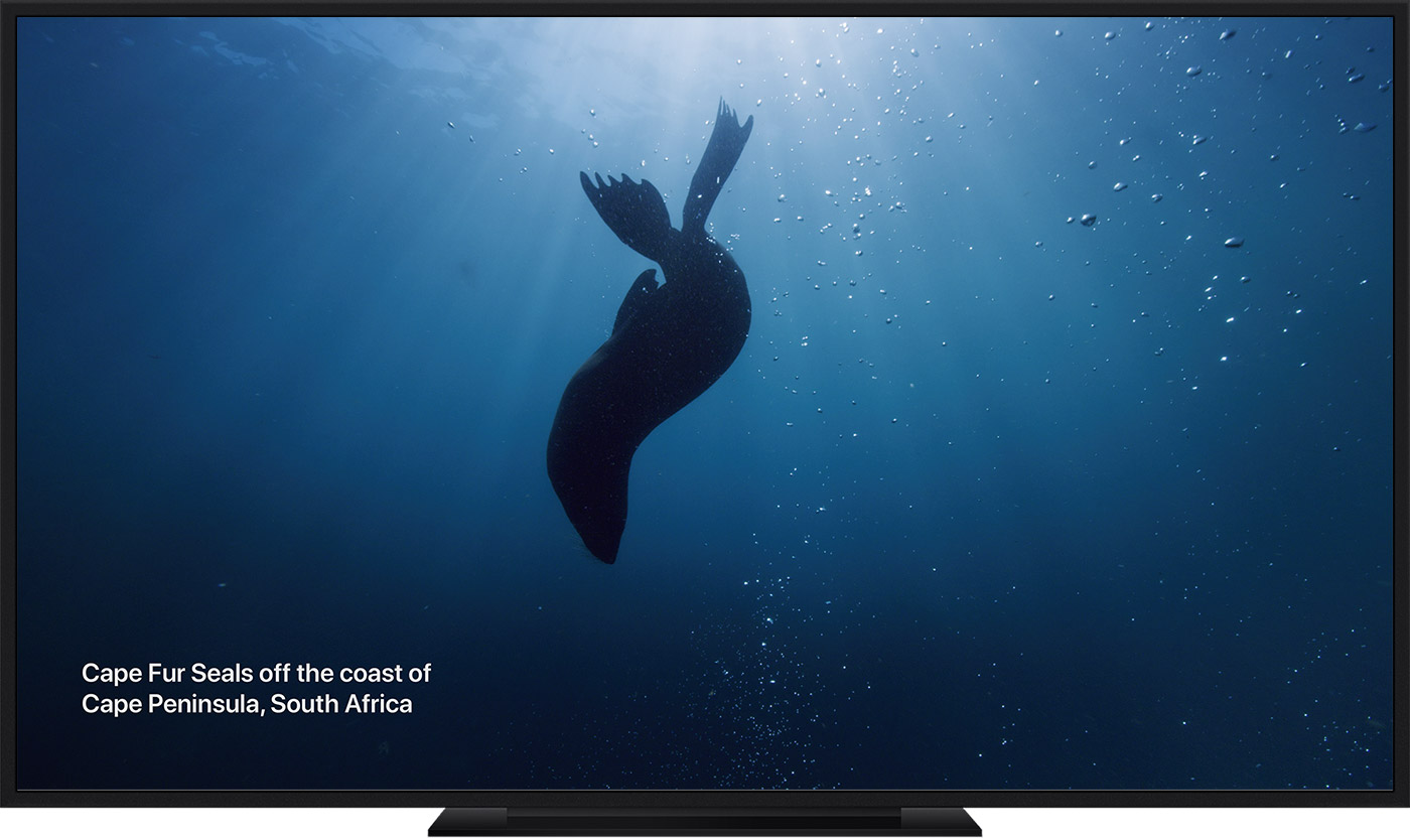 An Apple TV Aerial screen saver of Cape Fur Seals.