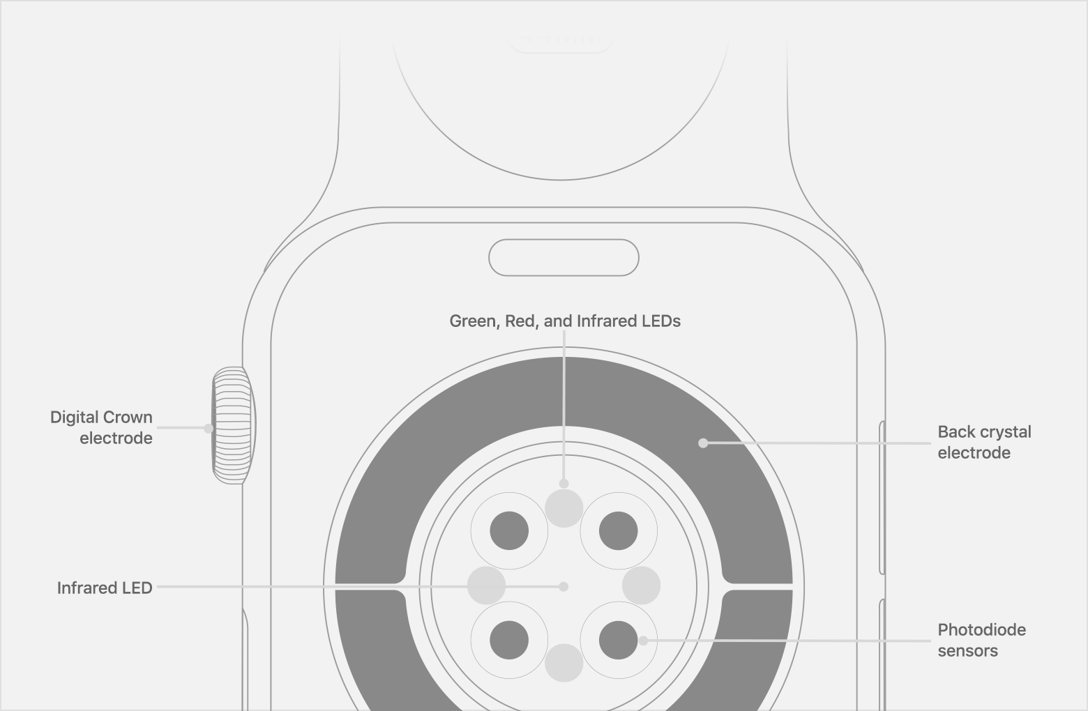 Location of Photodiode sensors, Infrared LEDs, and Green LEDs on Apple Watch Series 6.