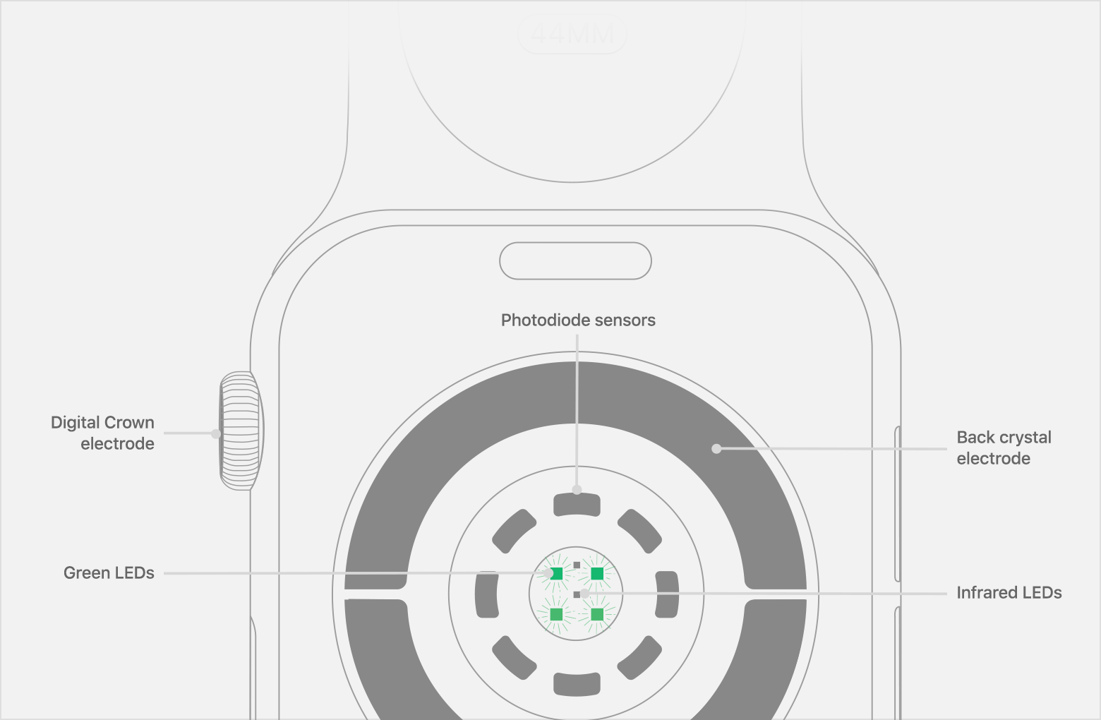 Emplacement des photodiodes, des voyants LED infrarouges et verts sur l'Apple Watch Series 4.