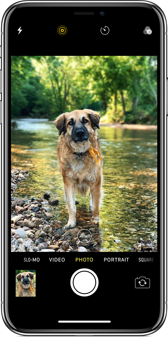 taking a photo of a dog with iPhone